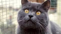 Gatos matam bilhões de animais e ameaçam vida selvagem dos EUA