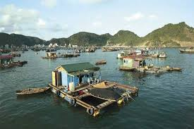 Houseboats in the Gulf of Tonkin at Ha Long Bay  northern Vietnam  a UNESCO Encyclopedia Britannica