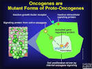 <b>Oncogenes</b> are Mutant Forms of