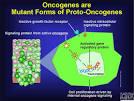 Forms of <b>Proto</b>-<b>Oncogenes</b>