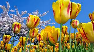 வால்பேப்பர்கள் ( flowers wallpapers ) - Page 3 Images?q=tbn:ANd9GcR48KvDayi3IkxQE0lax9-P5PpcFF6alw3gRbvdQUQ1xeOQP90vHQ