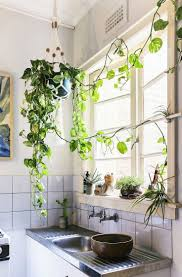 best 25 hippie kitchen ideas on pinterest gypsy kitchen hanging ivy