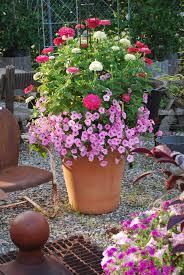 container garden of calibrachoa and zinnia container gardens