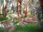 رحلة إلى  صحرائنا صحراء الجزائر الغالية  Images?q=tbn:ANd9GcR4wszX-itP5pyD2SvmuLYpLEWWWyoUPXuxk0C4u_ni2uIXocxXFRb9nqo