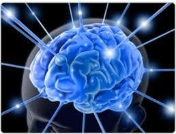 www.aybilgi.net beyin gücü, beyin hakkında bilgi.