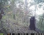 trail cam demon