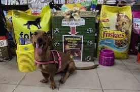 Grupo ' Celeiro dos Anjos' realiza campanha para ajudar cães e ...