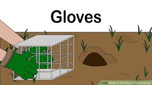 How Do You Get Rid Of Possums In The Backyard by 4 Ways To Get Rid Of Groundhogs Wikihow