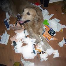 perro-rompe-cosas