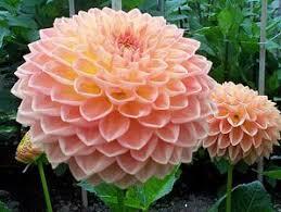 Las flores que nos gustan. Images?q=tbn:ANd9GcR8DvjVjZpeYe83zSqpalTFiKHbceCf29UQ8WmJEvpOvmmeumDZSQ