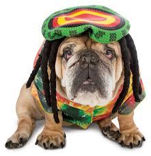 Dog Costumes Halloween 21 Rasta Imposta Dog Costumes Images