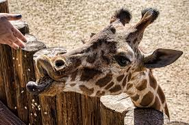 See Rare  amp  Exotic Animals at Wildlife World Zoo   Phoenix  Arizona Escaping Abroad