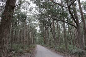 Mares Forest National Park