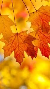 cute fall wallpaper backgrounds 221 best autumn wallpapers images on pinterest wallpaper