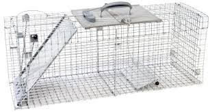 How Do You Get Rid Of Possums In The Backyard by How To Get Rid Of Possums Remove These Pests In Your Home U0026 Yard