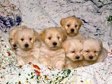 imagenes de cachorrros