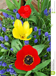 Tree With Bright Yellow Flowers - tree bright tulips red and yellow between blue small flowers i
