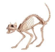 Halloween Skeleton Props by Amazon Com Crazy Bonez Skeleton Cat Toys U0026 Games