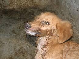 داء الكلب في صور  Images?q=tbn:ANd9GcRC3XECbocn9qJI4f_NPeNoBLOz4fBddAAUeZFNYB_NwT_EBxHUbQ