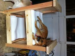 Diy Bedroom Set Plans Ana White Doggy Bunk Bed Diy Projects