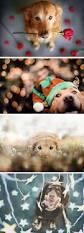 belgian sheepdog crossword clue the 22 most adorable pet beauty photos ever beauty photos