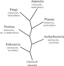 Image titled Write an Essay Step   Essays in Biochemistry   Biochemical Society