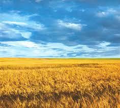 пейзажи україни, краевиди, україна, украина