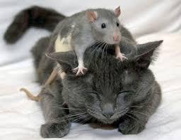 Who's the toughest mouse? Images?q=tbn:ANd9GcRDHNhsCDzw44CIhRGb8OhbuiBWL3kU-9qc3raNA0NAYGXDu4dV