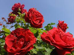 *•~-.¸¸,.-~*زهور اسلاميه*•~-.¸¸,.-~* images?q=tbn:ANd9GcRDtbMCgA7tJtFr_Q_LGSTIs-vVBeLt-otw7aOP5c9KoDRahLZ-GA