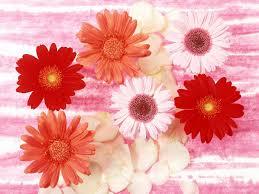 வால்பேப்பர்கள் ( flowers wallpapers ) - Page 3 Images?q=tbn:ANd9GcRDuX2Bk4nRkmJEnz9D9J8KzpzrG0ILwJXEDXRvnI3r6IA13xBY