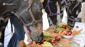 thanksgiving horse pictures horses having thanksgiving feast in the house youtube