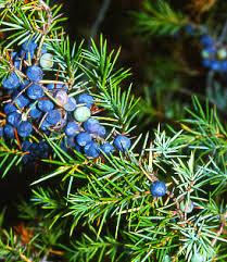 Glosario y propiedades mágicas de las plantas Images?q=tbn:ANd9GcREB5mJWRmT64wxuTYDlLjrRFmODYTKzu_1gILQflocCwIW_deA