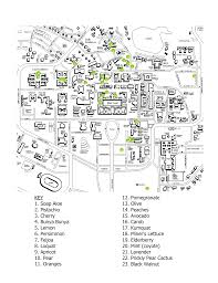 Stanford Shopping Center Map Map Of All Edible Fruit Trees On Campus The Unofficial Stanford Blog