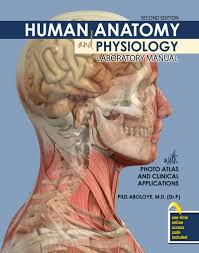Human Anatomy And Physiology Marieb 9th Edition Quizzes Human Anatomy And Physiology Lab Manual Periodic Tables