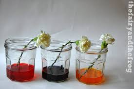 What Is Flower Food by The Fairy And The Frog Colour Changing Flower Science Experiment