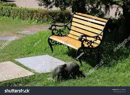 Beautiful Chairs by Beautiful Chairs Public Park Stock Photo 552178660 Shutterstock