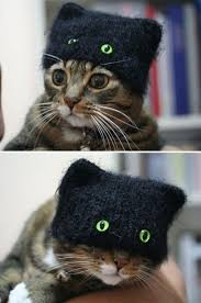 Kitten Costumes Halloween 20 Cat Costumes Halloween 2017