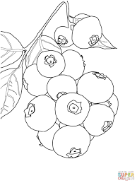blueberry branch coloring page free printable coloring pages