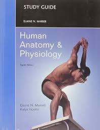 Human Anatomy And Physiology Marieb 9th Edition Quizzes Study Guide For Human Anatomy And Physiology Amazon Ca Elaine N