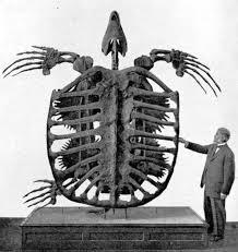 La tortuga más grande del mundo