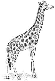 drawing giraffe by justinms66 traditional art drawings animals