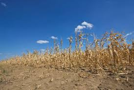 Climate Change Not At Fault For Record US <b>Drought</b> In 2012