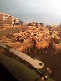 Karaberd, Shirak