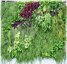 Vertical Garden Vegetables by Vertical Garden Images U0026 Stock Pictures Royalty Free Vertical