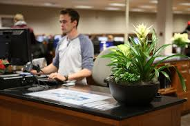 Office Desk Plants by Live Plants In The Library The Green Team Hbll