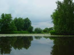 Gose Elbe