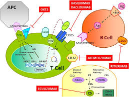 toxins free full text monoclonal antibody therapy and renal