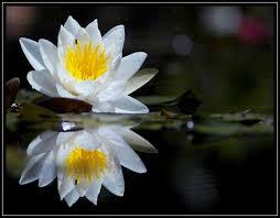 Las flores que nos gustan. Images?q=tbn:ANd9GcRMq3EL_eEeX0TEFfCv8ery-AG95ADRfzRF7q4AzdLpKkZ1RFpC