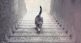 gag cat appears to be walking upstairs and downstairs at the same