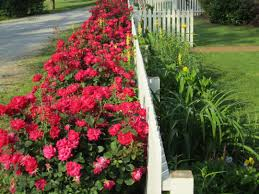 christmas decorations to make at home pink double knockout rose curb appeal pinterest roses and arafen
